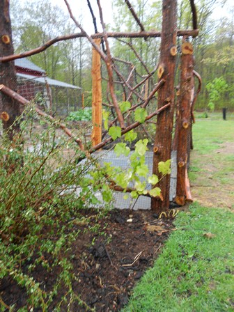 Rustic cedar arbor with grapevines