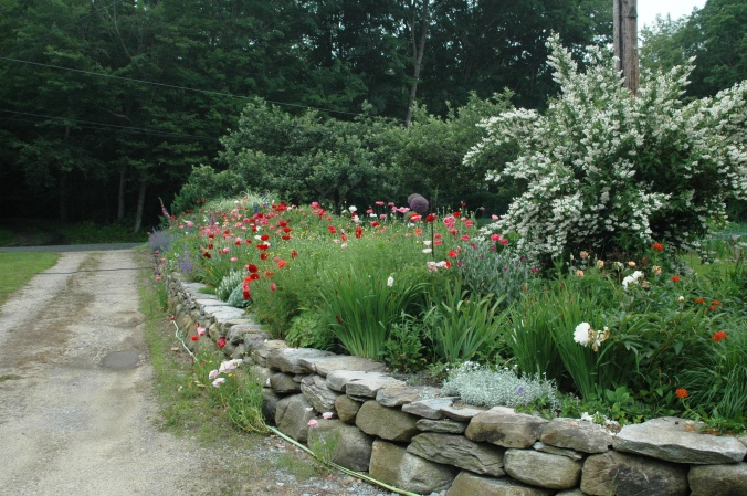 Poppies enliven the driveway border at Stonewell Farm.