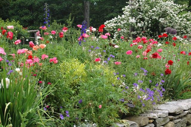 English style cottage garden